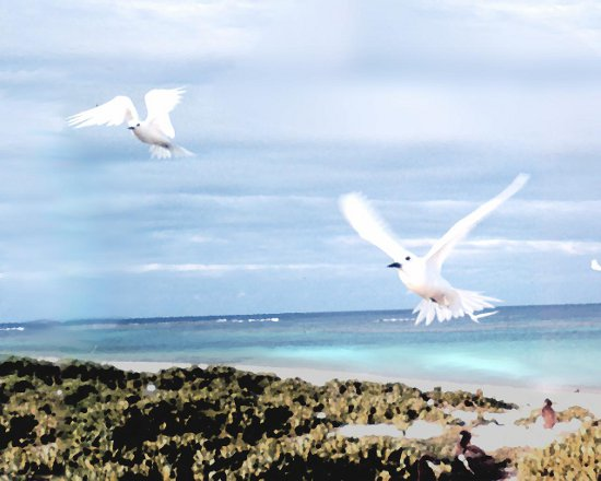 Click to get the codes for this image. 2 White Birds Flying At Beach, Animals  Birds, Nature Landscapes  Scenery Background, wallpaper or texture for any blog, web page, phone or desktop