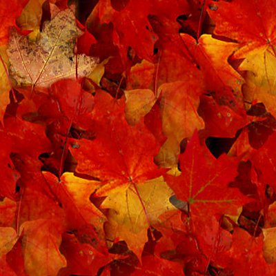 Click to get the codes for this image. Autumn Maple Leaves Seamless Texture, Plants and Leaves, Seasons  Fall, Colors  Orange Background, wallpaper or texture for Blogger, Wordpress, or any phone, desktop or blog.