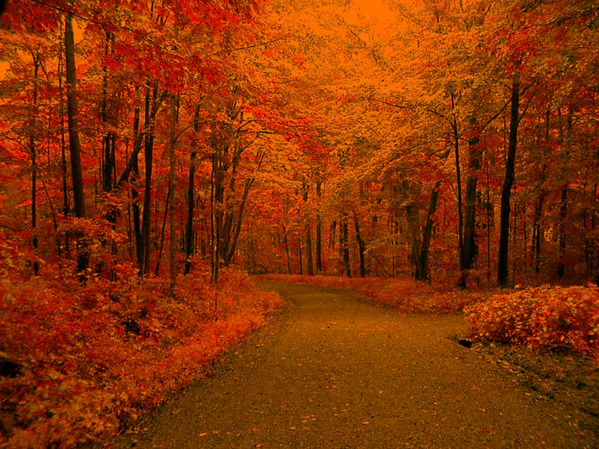Click to get the codes for this image. Autumn Road, Nature Landscapes  Scenery, Seasons  Fall, Colors  Orange Background, wallpaper or texture for Blogger, Wordpress, or any phone, desktop or blog.