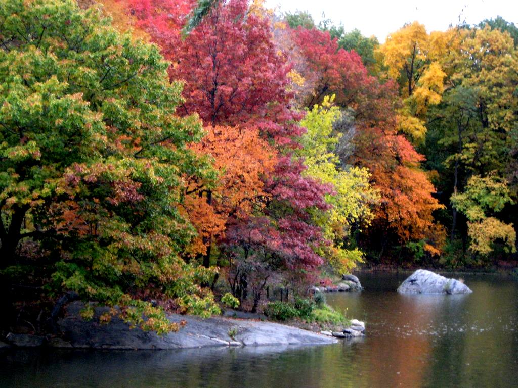 Click to get the codes for this image. Autumn Trees Along Lake In Central Park, Nature Landscapes  Scenery, Seasons  Fall Background, wallpaper or texture for Blogger, Wordpress, or any phone, desktop or blog.