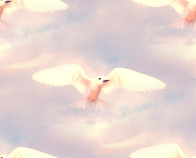 Click to get the codes for this image. Beautiful White Birds On Pastel Sky, Animals  Birds Background, wallpaper or texture for any blog, web page, phone or desktop