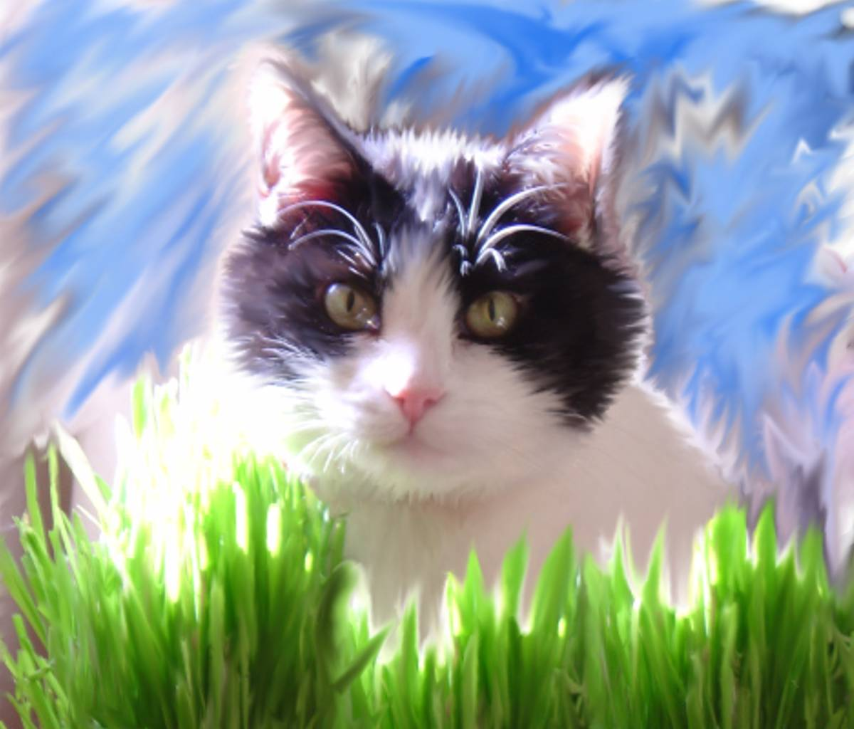 Click to get the codes for this image. Black And White Kitty With Grass, Animals  Cats Background, wallpaper or texture for any blog, web page, phone or desktop
