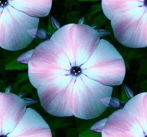 Flowers background potos pictures and images flowers floral designs mightylinksfo Choice Image