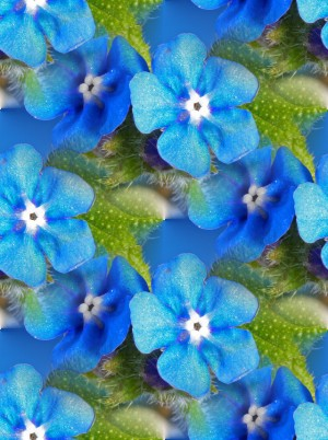 Click to get the codes for this image. Blue Flowers, Flowers  Floral Designs, Colors  Blue Background, wallpaper or texture for Blogger, Wordpress, or any phone, desktop or blog.