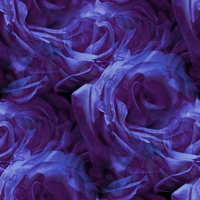 Click to get the codes for this image. Dark Purple Roses, Flowers  Floral Designs, Colors  Purple Background, wallpaper or texture for Blogger, Wordpress, or any phone, desktop or blog.