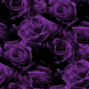 Click to get the codes for this image. Dark Purple Roses Pattern, Flowers  Floral Designs, Colors  Purple Background, wallpaper or texture for Blogger, Wordpress, or any phone, desktop or blog.