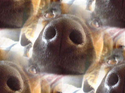 Click to get the codes for this image. Doggie Snouts, Animals  Dogs Background, wallpaper or texture for any blog, web page, phone or desktop