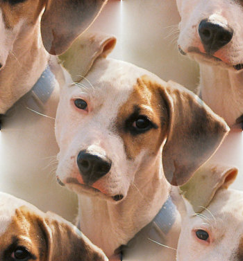 Click to get the codes for this image. Doggie With His Ear Up, Animals  Dogs Background, wallpaper or texture for any blog, web page, phone or desktop