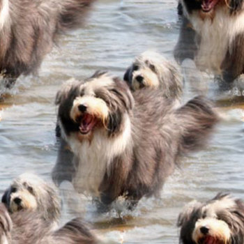 Click to get the codes for this image. Dogs In The Water, Animals  Dogs Background, wallpaper or texture for any blog, web page, phone or desktop