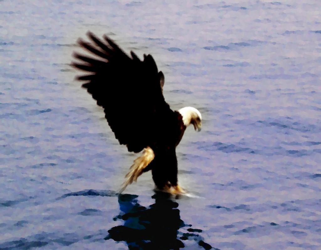 Click to get the codes for this image. Eagle Catching Fish Painting, Nature Landscapes  Scenery, Animals  Birds Background, wallpaper or texture for any blog, web page, phone or desktop