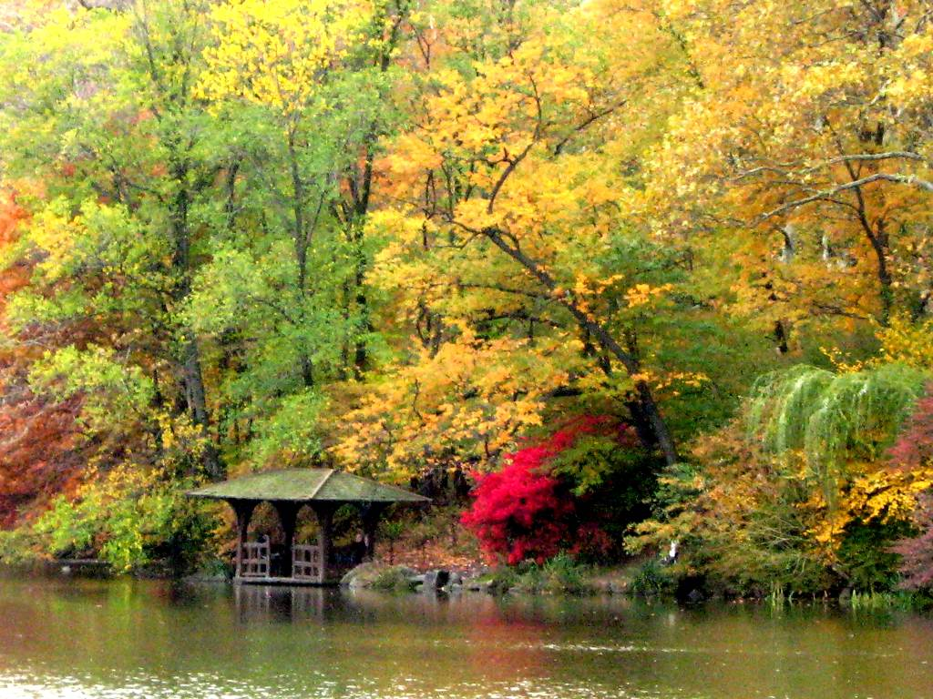 Click to get the codes for this image. Fall Colors In Central Park, Nature Landscapes  Scenery, Seasons  Fall Background, wallpaper or texture for Blogger, Wordpress, or any phone, desktop or blog.