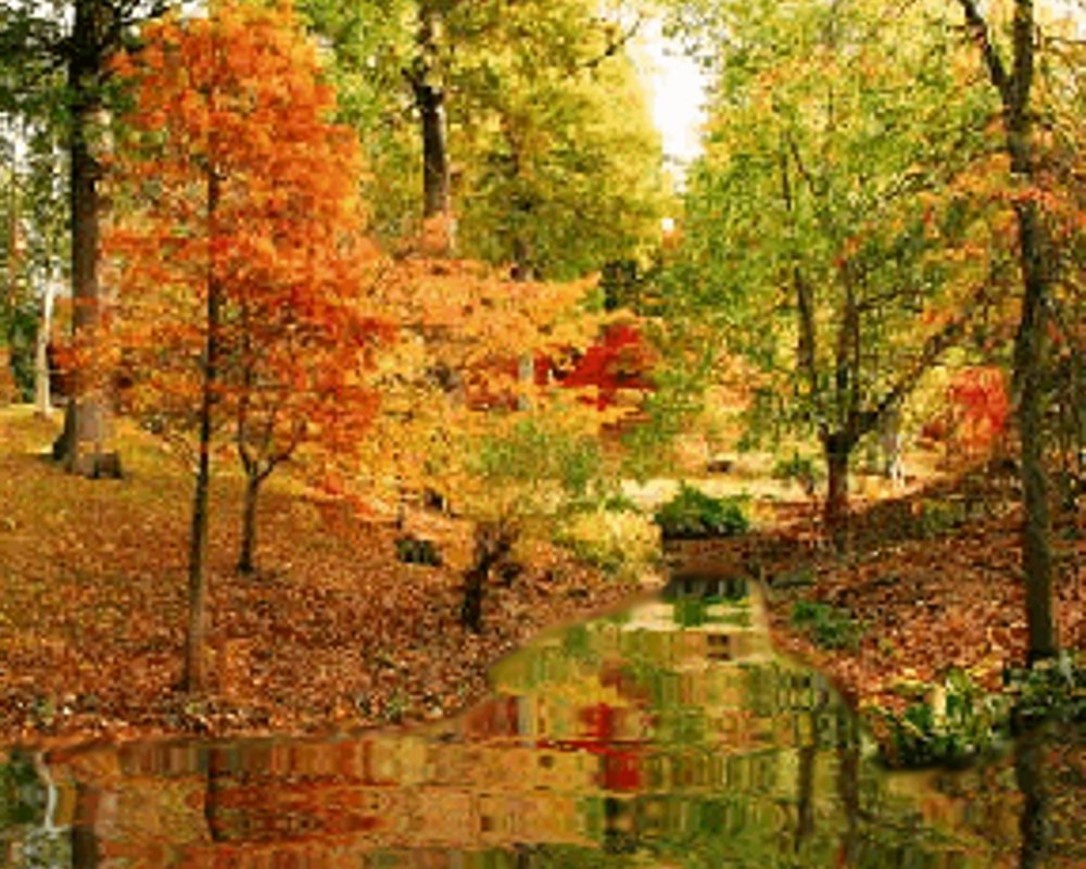 Click to get backgrounds, textures and wallpaper images of fall or autumn themes