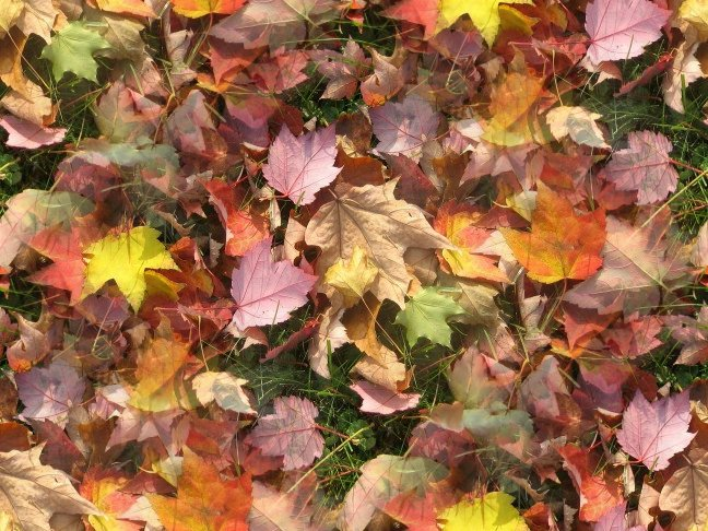 Click to get the codes for this image. Fall Leaves, Patterns  Nature Inspired, Seasons  Fall, Plants and Leaves Background, wallpaper or texture for Blogger, Wordpress, or any phone, desktop or blog.
