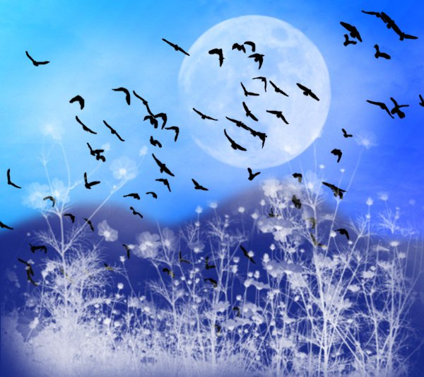 Click to get the codes for this image. Fantasy Landscape Witn Birds Background Blue 1800x1600, Animals  Birds, Fantasy, Colors  Blue Background, wallpaper or texture for, Blogger, Wordpress, or any web page, blog, desktop or phone.