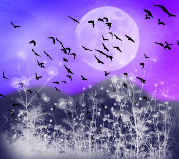 Click to get the codes for this image. Fantasy Landscape Witn Birds Background Blue Purple 1800x1600, Animals  Birds, Fantasy, Colors  Purple, Colors  Blue Background, wallpaper or texture for, Blogger, Wordpress, or any web page, blog, desktop or phone.