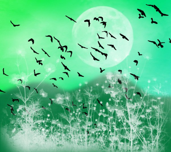 Click to get the codes for this image. Fantasy Landscape Witn Birds Background Green 1800x1600, Animals  Birds, Fantasy, Colors  Green Background, wallpaper or texture for, Blogger, Wordpress, or any web page, blog, desktop or phone.