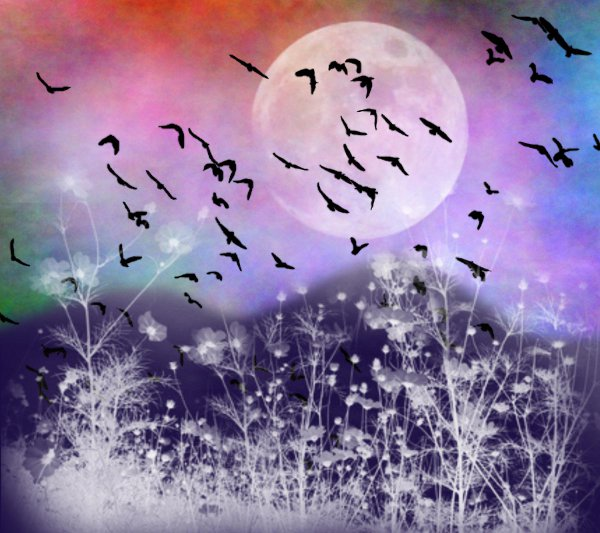 Click to get the codes for this image. Fantasy Landscape Witn Birds Background Multi Colored 1800x1600, Animals  Birds, Fantasy, Colors  Rainbow Background, wallpaper or texture for, Blogger, Wordpress, or any web page, blog, desktop or phone.