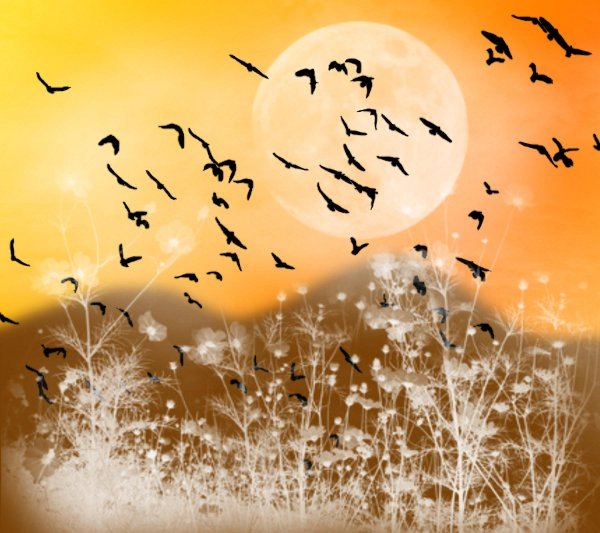 Click to get the codes for this image. Fantasy Landscape Witn Birds Background Orange Gold 1800x1600, Animals  Birds, Fantasy, Colors  Orange Background, wallpaper or texture for, Blogger, Wordpress, or any web page, blog, desktop or phone.