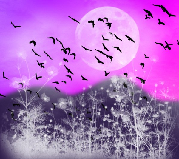 Click to get the codes for this image. Fantasy Landscape Witn Birds Background Pink Purple 1800x1600, Animals  Birds, Fantasy, Colors  Pink, Colors  Purple Background, wallpaper or texture for, Blogger, Wordpress, or any web page, blog, desktop or phone.