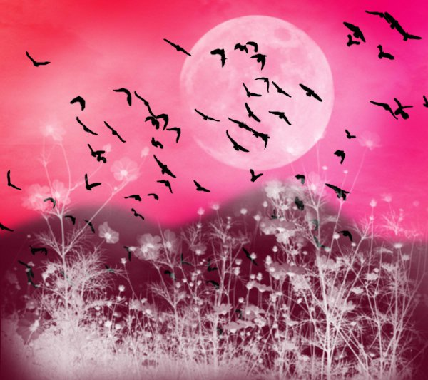 Click to get the codes for this image. Fantasy Landscape Witn Birds Background Pink Red 1800x1600, Animals  Birds, Fantasy, Colors  Pink, Colors  Rainbow Background, wallpaper or texture for, Blogger, Wordpress, or any web page, blog, desktop or phone.