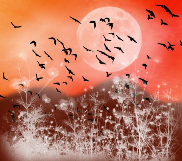 Click to get the codes for this image. Fantasy Landscape Witn Birds Background Red Orange 1800x1600, Animals  Birds, Fantasy, Colors  Red, Colors  Orange Background, wallpaper or texture for, Blogger, Wordpress, or any web page, blog, desktop or phone.