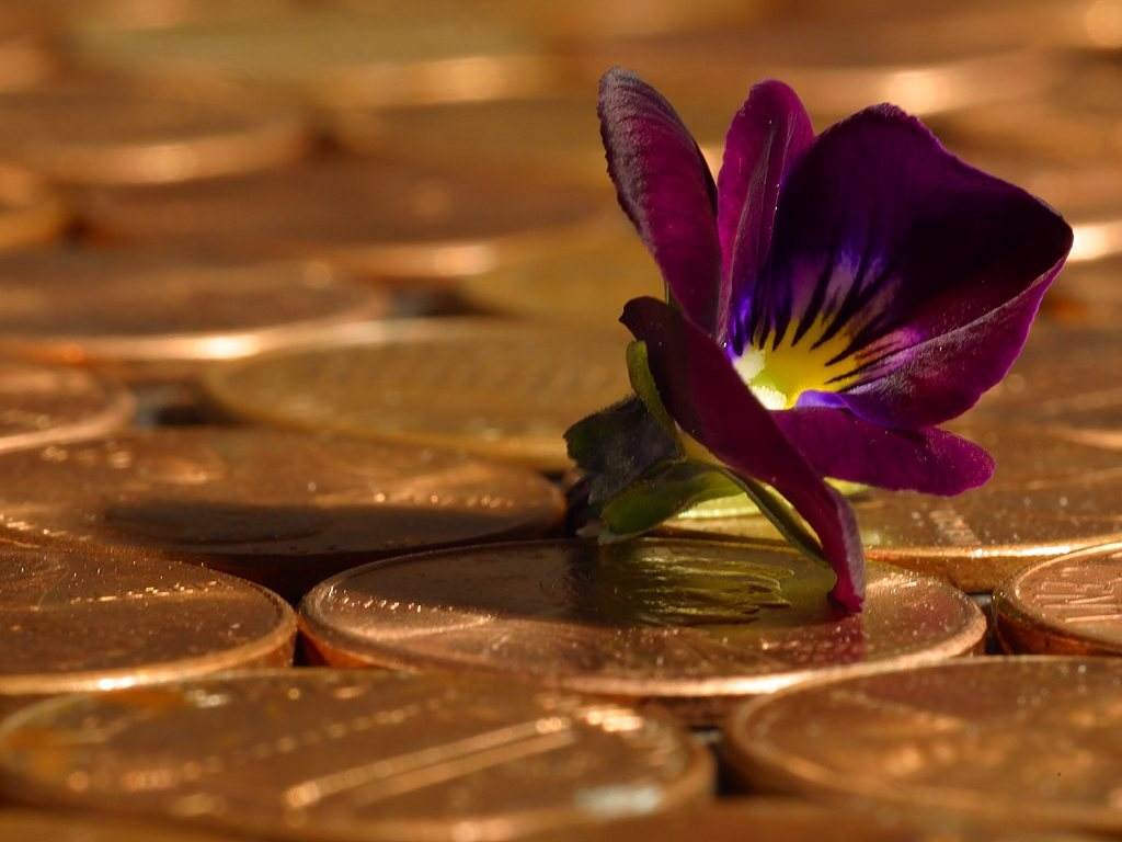 Click to get the codes for this image. Flower On Pennies, Money and Coins Background, wallpaper or texture for, Blogger, Wordpress, or any web page, blog, desktop or phone.