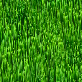 Click to get the codes for this image. Grass Background, Colors  Green, Patterns  Nature Inspired, Plants and Leaves Background, wallpaper or texture for Blogger, Wordpress, or any phone, desktop or blog.