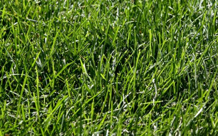Click to get the codes for this image. Green Grass Closeup 1920x1200, Colors  Green, Plants and Leaves Background, wallpaper or texture for Blogger, Wordpress, or any phone, desktop or blog.