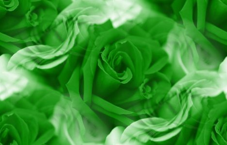 Click to get the codes for this image. Green Roses, Saint Patrick's Day, Colors  Green, Flowers  Floral Designs Background, wallpaper or texture for Blogger, Wordpress, or any phone, desktop or blog.