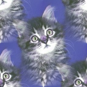 Click to get the codes for this image. Grey Tabby Kitten, Animals  Cats Background, wallpaper or texture for any blog, web page, phone or desktop