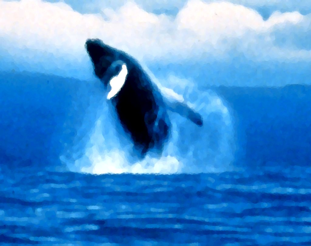 Click to get the codes for this image. Jumping Orca Painting, Animals  Ocean Life Background, wallpaper or texture for any blog, web page, phone or desktop