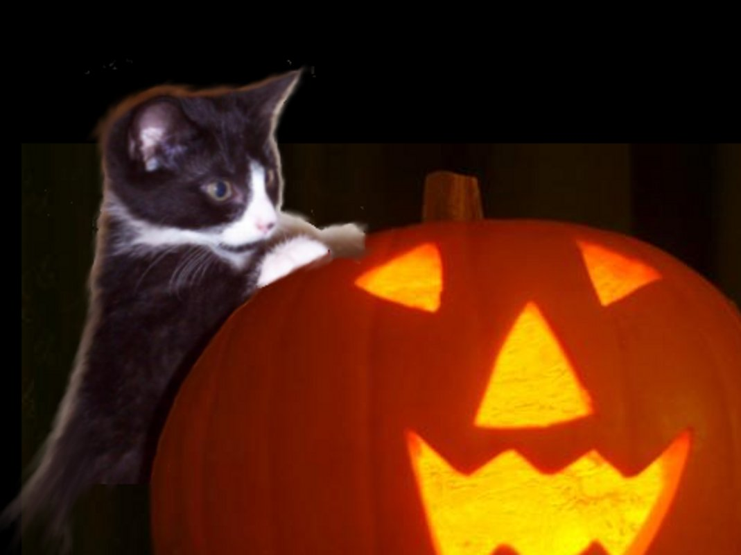 Click to get the codes for this image. Kitten With Halloween Pumpkin, Halloween Background, wallpaper or texture for Blogger, Wordpress, or any phone, desktop or blog.
