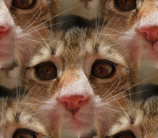 Click to browse cat backgrounds, textures, wallpapers and seamless patterns.
