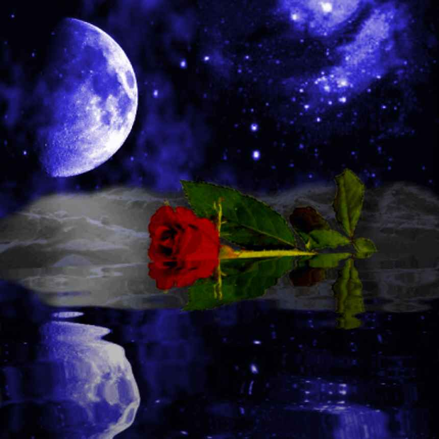 Purple Rose Moonlight