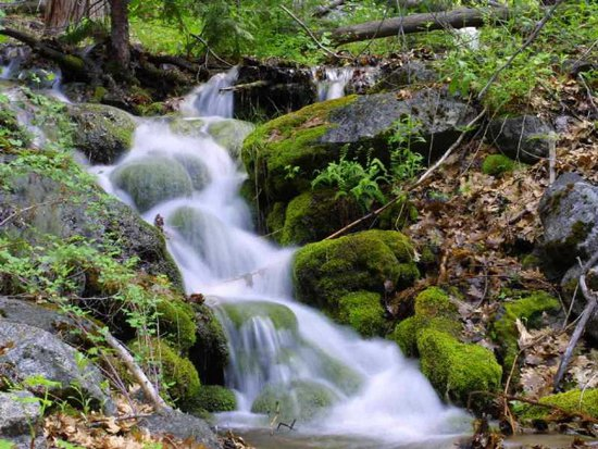 Click to get the codes for this image. Mossy Stream, Nature Landscapes  Scenery, Ocean  Water Background, wallpaper or texture for any blog, web page, phone or desktop