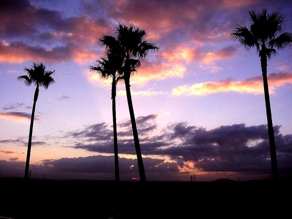 Click to get the codes for this image. Palm Trees At Sunset, Sunsets and Sunrises, Seasons  Summer Background, wallpaper or texture for Blogger, Wordpress, or any phone, desktop or blog.
