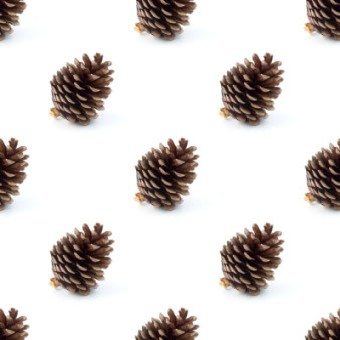 Click to get the codes for this image. Pine Cones On White Background, Patterns  Nature Inspired Background, wallpaper or texture for Blogger, Wordpress, or any phone, desktop or blog.