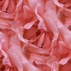 Click to get the codes for this image. Pink Rose Petals, Flowers  Floral Designs, Colors  Pink, Holidays  Valentines Day Background, wallpaper or texture for Blogger, Wordpress, or any phone, desktop or blog.