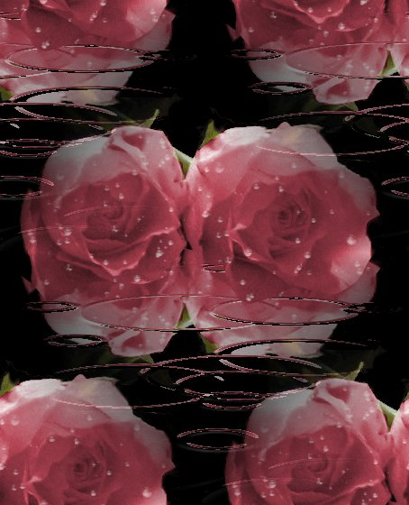images of roses with rain drops. images of roses with rain drops. Pink Roses With Raindrops
