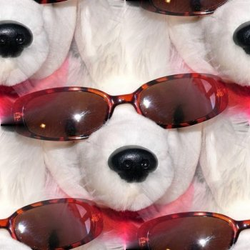 Click to get the codes for this image. Poodle With Sunglasses, Animals  Dogs Background, wallpaper or texture for any blog, web page, phone or desktop