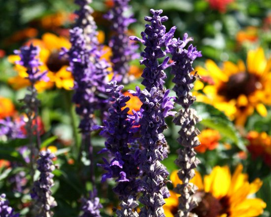Click to get the codes for this image. Purple And Orange Wild Flowers, Flowers  Floral Designs, Seasons  Summer Background, wallpaper or texture for Blogger, Wordpress, or any phone, desktop or blog.