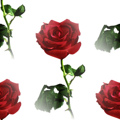 Click to get the codes for this image. Red Rose Background, Flowers  Floral Designs, Colors  Red, Holidays  Valentines Day Background, wallpaper or texture for Blogger, Wordpress, or any phone, desktop or blog.
