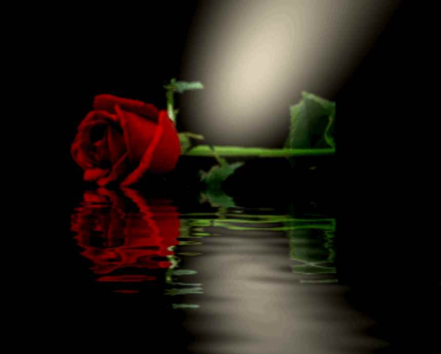 Click to get the codes for this image. Red Rose Reflecting In Pool, Flowers  Floral Designs, Holidays  Valentines Day Background, wallpaper or texture for Blogger, Wordpress, or any phone, desktop or blog.