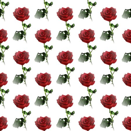 Click to get the codes for this image. Red Rose Small, Flowers  Floral Designs, Holidays  Valentines Day Background, wallpaper or texture for Blogger, Wordpress, or any phone, desktop or blog.