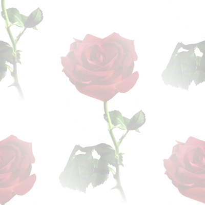 Click to get the codes for this image. Red Rose Watermark, Flowers  Floral Designs, Colors  Light and Watermark, Holidays  Valentines Day Background, wallpaper or texture for Blogger, Wordpress, or any phone, desktop or blog.