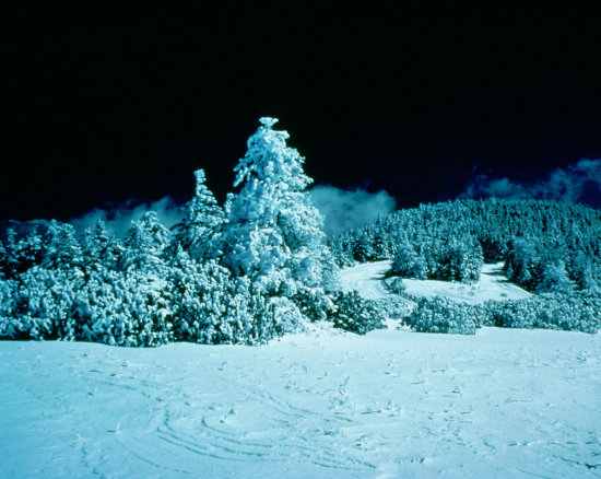 Click to get the codes for this image. Snow Covered Trees At Night, Nature Landscapes  Scenery, Seasons  Winter Background, wallpaper or texture for Blogger, Wordpress, or any phone, desktop or blog.