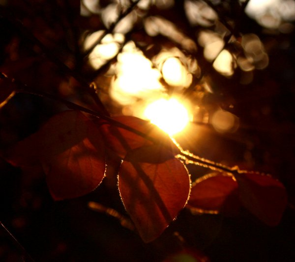 Click to get the codes for this image. Sunlight Through Autumn Leaves Background 1800x1600, Seasons  Fall, Plants and Leaves Background, wallpaper or texture for Blogger, Wordpress, or any phone, desktop or blog.