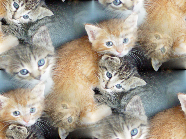 Click to get the codes for this image. Tabby Kittens, Animals  Cats Background, wallpaper or texture for any blog, web page, phone or desktop