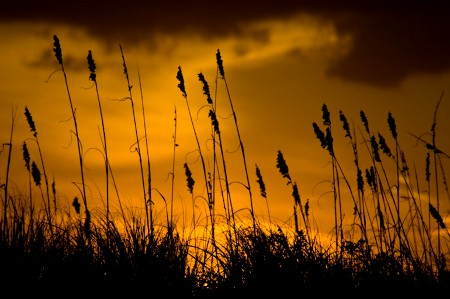 Click to get the codes for this image. Tall Grass At Sunset Background 1540x1024, Sunsets and Sunrises Background, wallpaper or texture for any blog, web page, phone or desktop