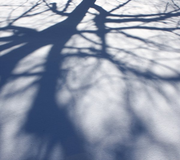 Click to get the codes for this image. Tree Branch Shadows On Snow Background 1800x1600, Snow and Ice, Seasons  Winter Background, wallpaper or texture for Blogger, Wordpress, or any phone, desktop or blog.